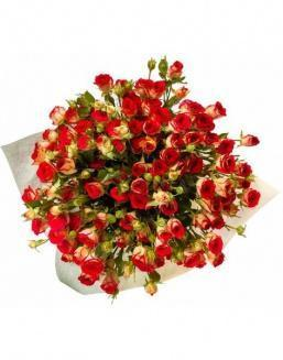 Bouquet of 101 red rose bushes